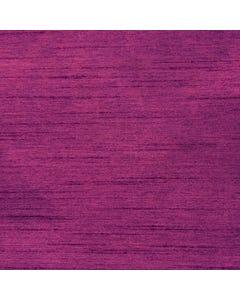 Fuchsia Nova Solid
